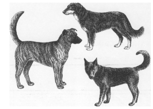 honden